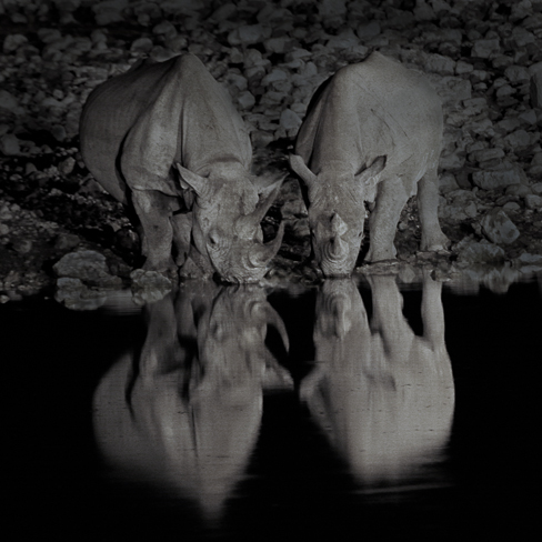 Rhino Reflection, Etosha, Namibia, by Andrew Jones
